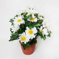 6486P - Fleurs...