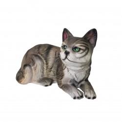 88005 – Chat gris aux yeux...